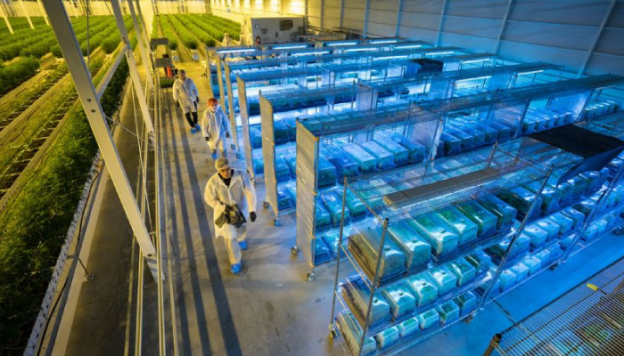 A look inside Aurora Cannabis' production capabilities