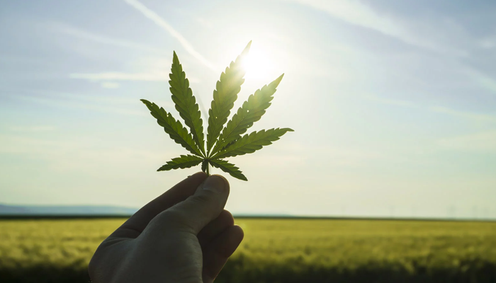 Aurora Cannabis continues to be a favorite among investors