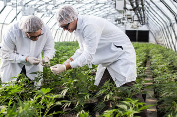 Aurora Cannabis to introduce Product Information Numbers