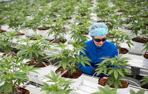 Aurora Cannabis subsidiary reports zero revenue, and that's a good thing