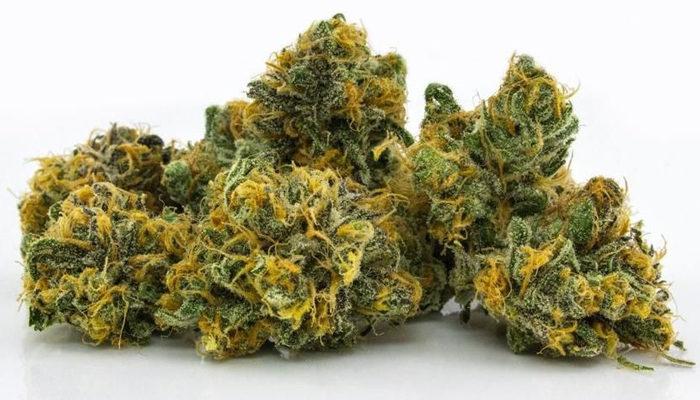 Aurora Cannabis announces budtender program