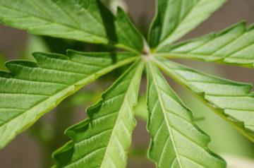 Aurora Cannabis expands management team