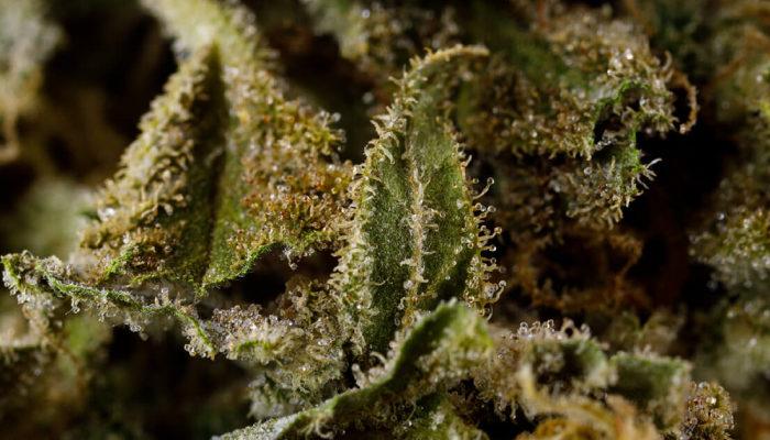Aurora Cannabis looks to combat cannabis odors