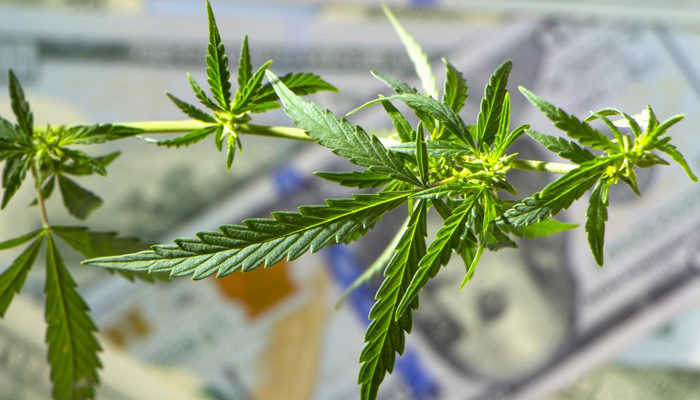 Aurora Cannabis releases earnings report, shows improvements