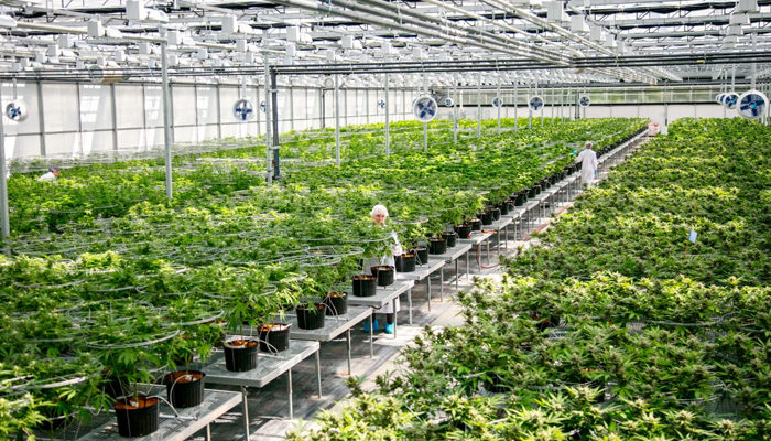 Aurora Cannabis continues to show that its methods are working