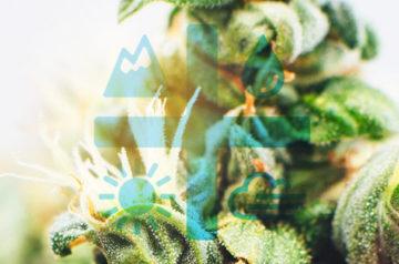Aurora Cannabis still making waves