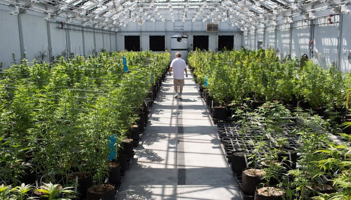 Why Charlotte's Web's cannabis patent matters