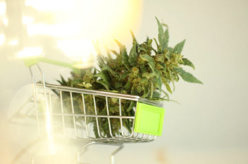 Aurora Cannabis improves after launch of first retail store, completes debenture conversion