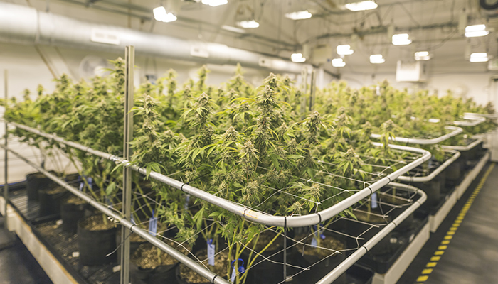 Aurora Cannabis to sell MedReleaf facility