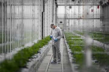 Aurora Cannabis sees major expansion within six months
