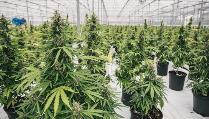 Canopy Rivers provides updates to several business segments
