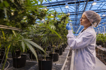 Aphria investors stand to receive huge dividends from the company's performance