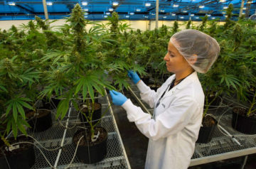 Despite slips, Canopy Growth is ready to push forward with cultivation facility