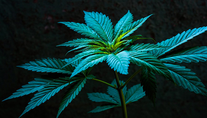 Canopy Growth tightens its belt again as the coronavirus continues its threat