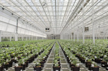 Aphria poised to be one of the greater growth stories of the year