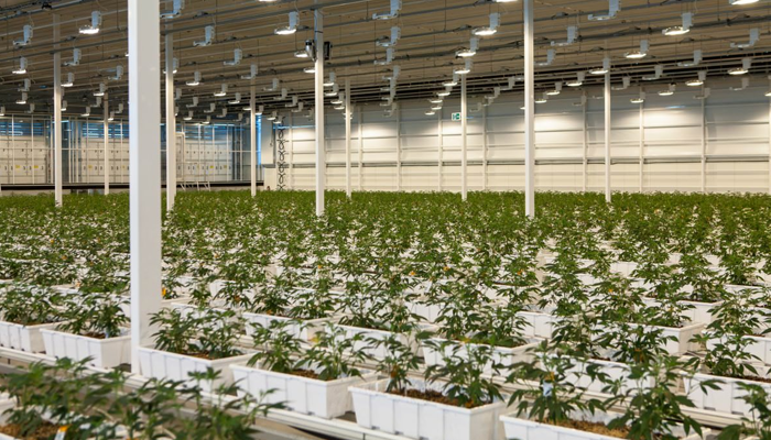 Aurora Cannabis stays committed to German cultivation as it reorganizes the company