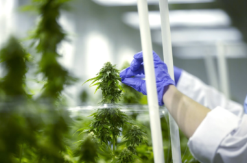 Canopy Growth to move away from pharmaceutical research