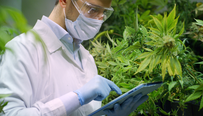 TerrAscend to start cannabis cultivation in New Jersey after approval from regulators