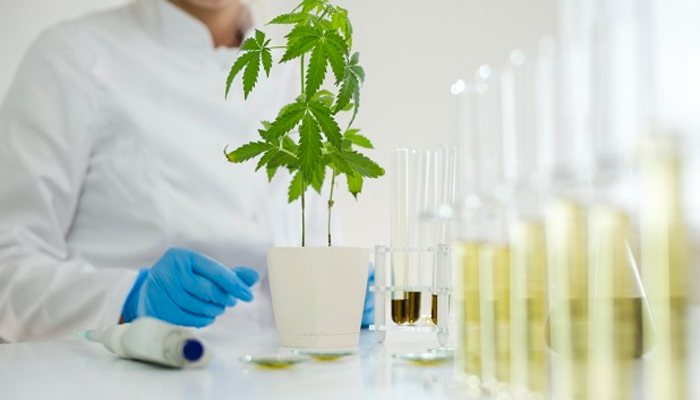 Canopy Growth subsidiary Spectrum Biomedical signs partnership with Emerald Clinics