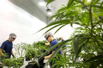 Canopy Growth makes huge strides in Canada's cannabis market