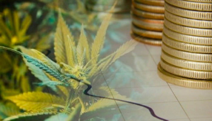 Canopy Growth VP is now part of the Benzinga Cannabis Advisory Council
