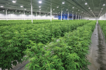 Aurora Cannabis appoints a new CEO to man the helm
