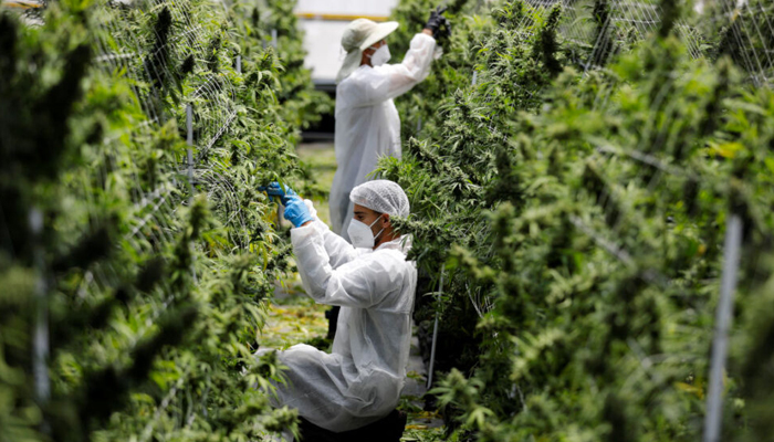 TerrAscend begins sales operations from expanded cultivation facility