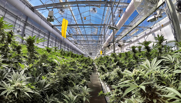 Canopy Rivers updates status on sale of PharmHouse, investment plans