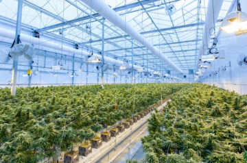 Charlotte's Web Holdings teams up with Canndoc for global expansion