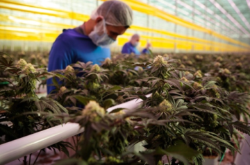 Aphria CEO optimistic about the cannabis company's growth in 2021