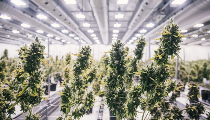 Canopy Growth adds more awards to its growing list of accomplishments
