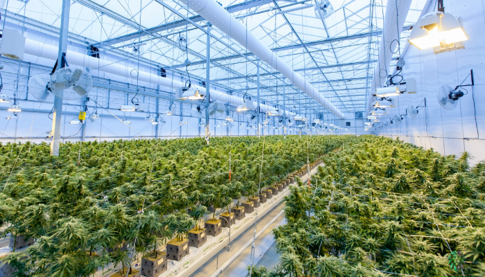 Aphria adds independent proxy support for its merger with Tilray