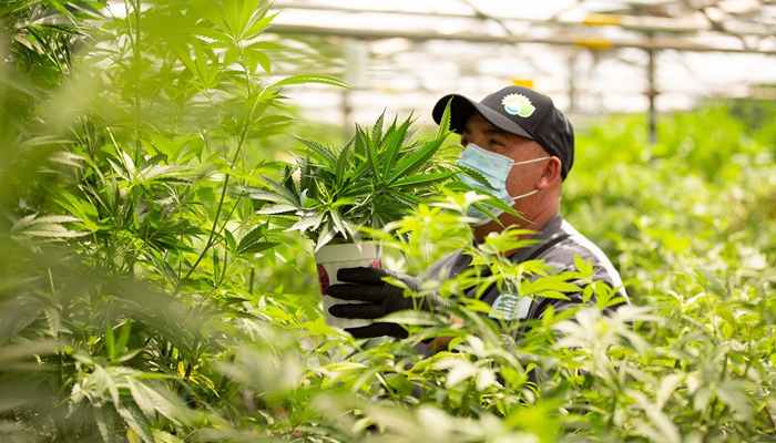 Aphria to add more consumer brands as it waits for nationwide cannabis legalization