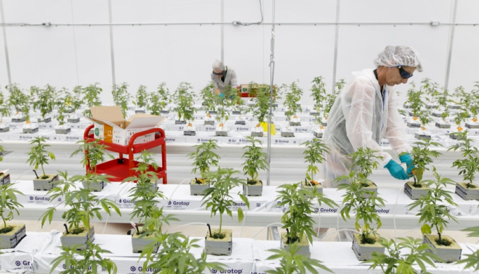 What the acquisition of Supreme Cannabis means to Canopy Growth