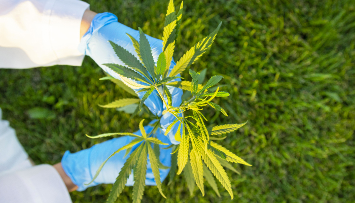 Aurora Cannabis is cleaning house as it looks to continue growth