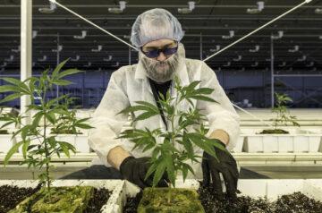 Aurora Cannabis European subsidiary makes investment into cannabis education