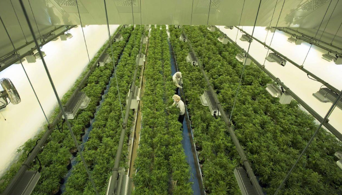 Canopy Growth purchase of Supreme Cannabis presses forward