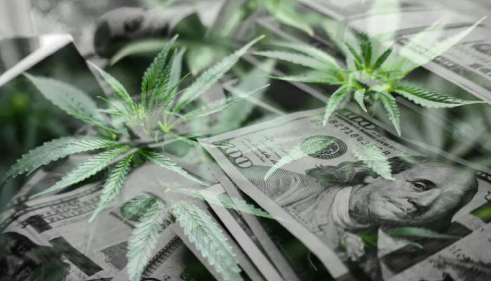 Canopy Growth reports latest earnings, shows 37% revenue growth
