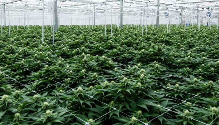 Supreme Cannabis shareholders approve acquisition by Canopy Growth