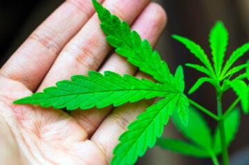 Aurora Cannabis completes shipment of cannabis to Israel