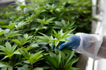 Canopy Growth prepares to release latest financial report