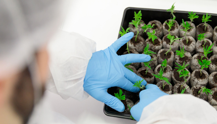 Tilray subsidiary Manitoba Harvest launches new cannabis research project