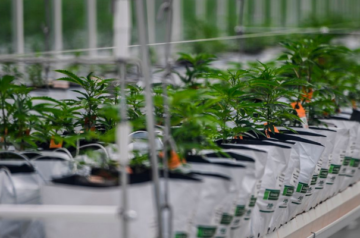 Tilray lays out its plans for US expansion in the US