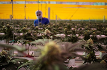Tilray makes executive changes to strengthen its position in Canada